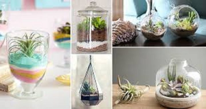 Make Your Own Terrarium With This Simple Guidance