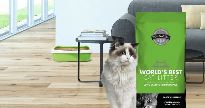 Understand How to Take Care of Cats Well, Anabul Lovers Must Know